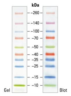Fermentas Protein Maker 蛋白maker 上海伟进生物科技有限公司